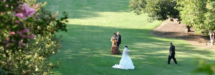 Weddings - The Arboretum